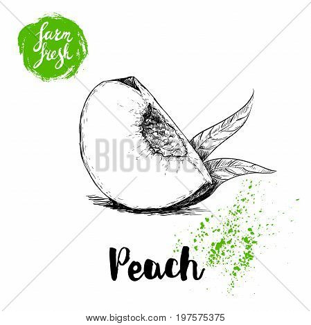 Hand drawn sketch style quarter of peach fruit. Eco food fresh farm poster.