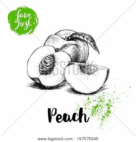 Hand drawn sketch style peach fruit. Farm fresh eco food vector illustration. Ripe peach peach slices.