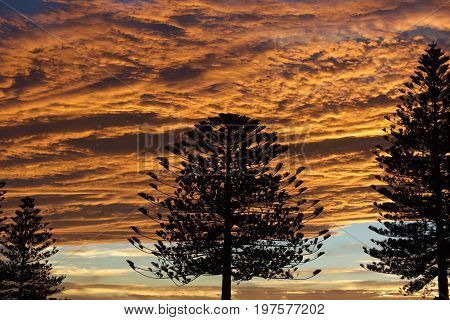 Dramatic sunset lights over trees. Amazing sunset in Napier, New Zealand