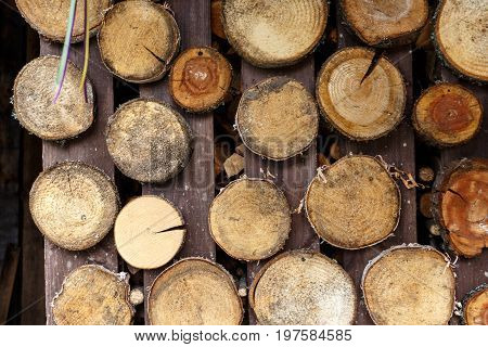 Wall Is Decorated With Sawn Wood Rings