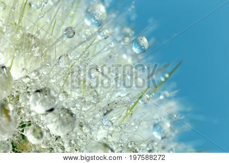 Water drops on cactus needles, interesting abstract macro background
