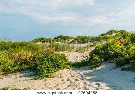 Grass-covered sand dunes at Coquina Beach on the Outer Banks in North Carolina at Cape Hatteras National Seashore.