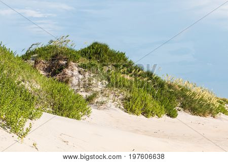 Sand dune covered in beach grass at Coquina Beach, located in the Cape Hatteras National Seashore.