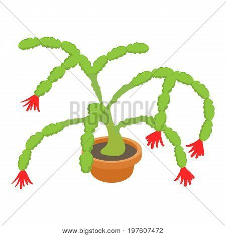 Christmas cactus icon. cartoon illustration of christmas cactus vector icon for web