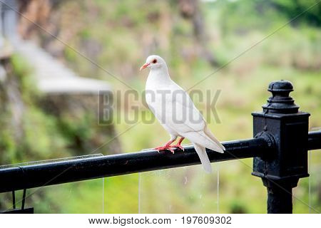 white seagull,  freedom bird at nature park