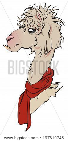 A cute Llama Alpaca, available as a vector file