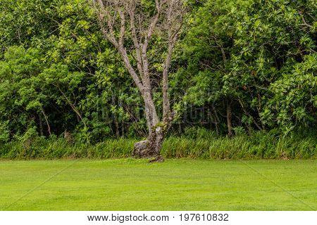 Single Barren Tree In A Meadow