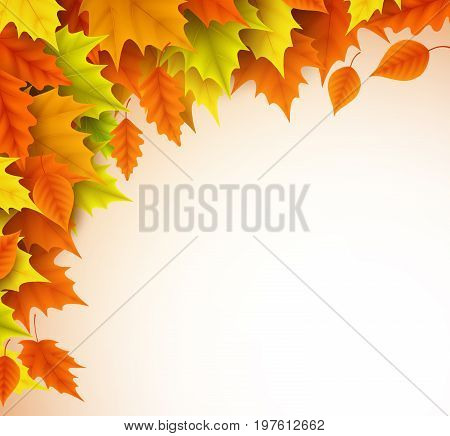 Autumn vector background template. Fall season maple leaves elements with empty blank white space for text. Vector illustration.