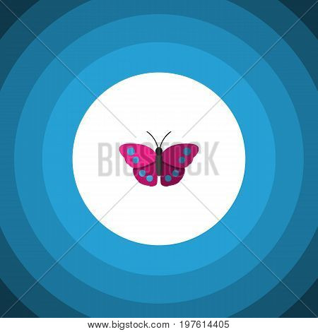 Archippus Vector Element Can Be Used For Archippus, Butterfly, Monarch Design Concept.  Isolated Violet Wing Flat Icon.