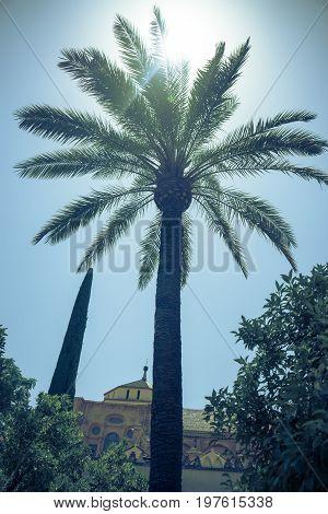 Sunshine Over A Palm Tree In Cordoba, Spain, Europe