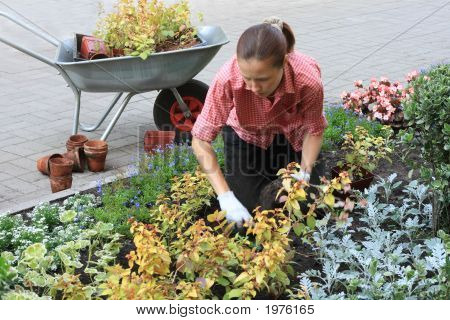 Woman Planting Out Flowers