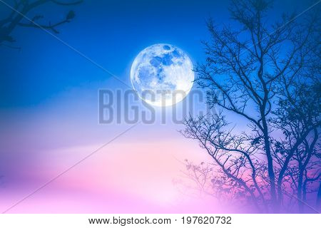 Night landscape of colorful sky foggy is swinging between silhouette of dry tree and bright full moon. Serenity nature background. Outdoor at nighttime. The moon taken with my own camera.