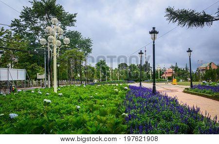 Purple Flowers At Garden In Dalat, Vietnam