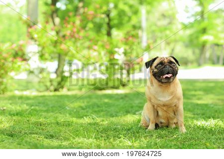 Cute dog sitting on green grass in park