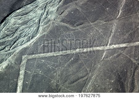 an ancient figure of a whale in the Nazca desert