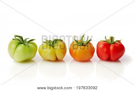 Ripening stages of tomato. Fruit in different stages of ripening.Tomato, fresh from the garden, side by side