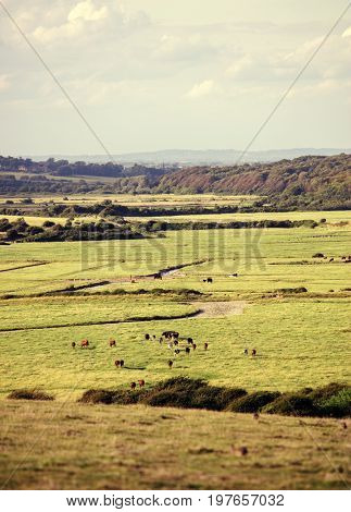 Beautiful countryside with a herd of cows with warm filter