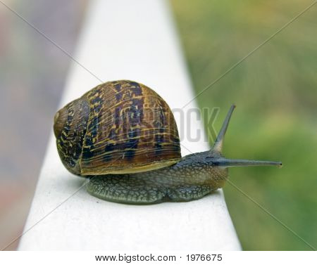 Snail On A Rail
