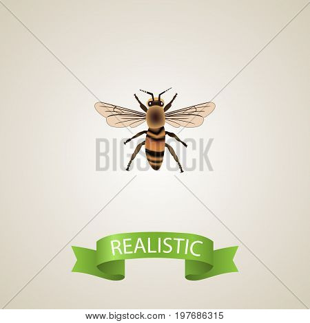 Realistic Housefly Element. Vector Illustration Of Realistic Wasp Isolated On Clean Background
