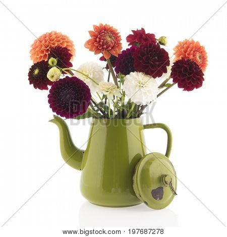 Bouquet Dahlia flowers in green vintage coffee can isolated over white background