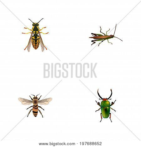 Realistic Locust, Bee, Wasp And Other Vector Elements