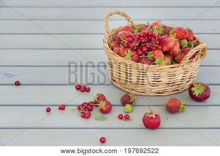 Closup of basket with organic garden summer strawberry berries. Healthy lifestyle and healthy eating. Vegetarian snack.Fruit and berries.