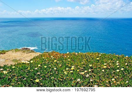 The Flowers On The Rock Of Cape Roca