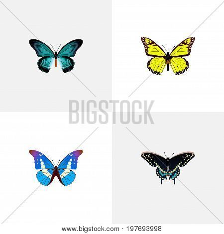 Realistic Morpho Hecuba, Archippus, Bluewing And Other Vector Elements