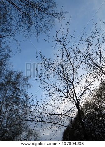 Landscape with the image of the moon against the background of blue sky framed by trees