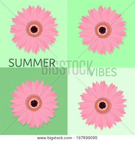 Summertime. Pink marigold flower with green background in different shades.