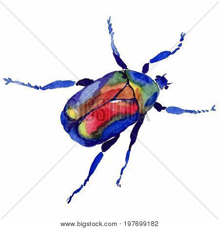 Exotic beetle bronzovka wild insect in a watercolor style isolated. Full name of the insect: beetle bronzovka. Aquarelle wild insect for background, texture, wrapper pattern or tattoo.