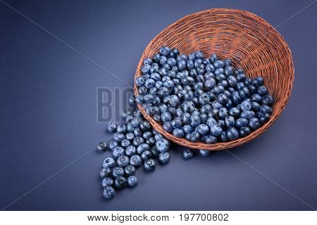 A view from above on bright blueberries in a wooden wicker basket on a saturated blue background. Fresh blueberries falling from a brown basket. Nutritious and healthy berries. Copy space.