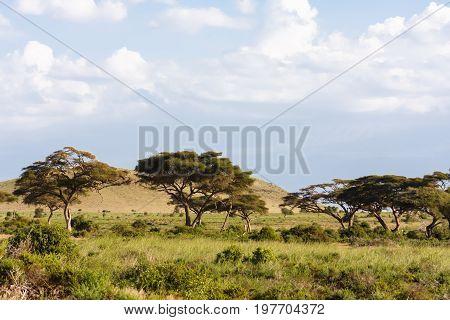 Landscapes of savanna of Amboseli. Kenya, Africa