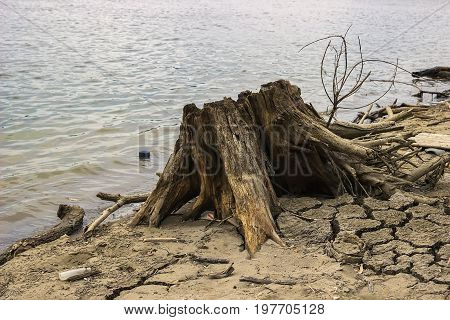 Stump Root And Garbage Waste On The Shore