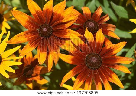Vibrant Colors on these Poor Land Daisies