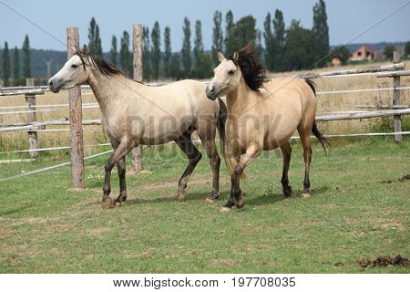 Two Horses Together On Pasturage
