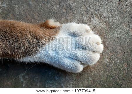 detail top view foot of cat foot
