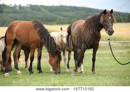 Horses Together On Pasturage