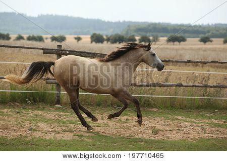 Beautiful Pony Moving On Pasturage