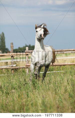 Amazing Pony Moving On Pasturage
