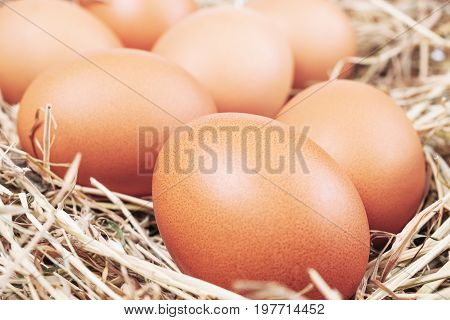 eggs on the hay clouse up. Fresh eggs