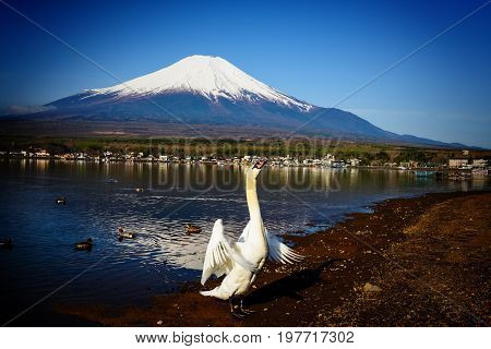 Swan Flap Wings With Mt. Fuji