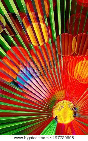 Close up of a fan shaped Palm leaf