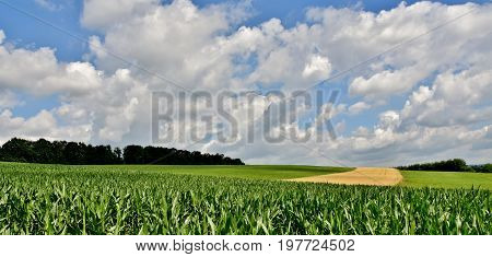 Landscape with fields and blue sky on a summers day