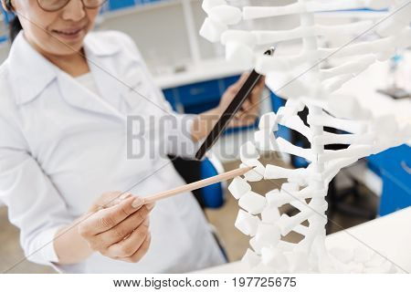 Genetic code. Professional good looking female scientist holding a pencil and pointing with it at the DNA model while studying genetic code