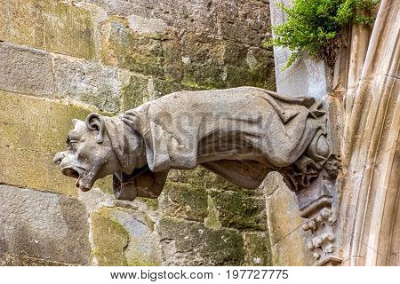 Gargoyles, which function as downspouts, protrude from the wall of Carcassonne Cathedral, France