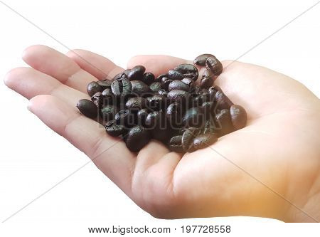 Coffee beansClose up of person holding coffee beans in handsHand and dark roast coffee beans close up.