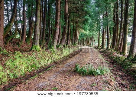 Wide angle view of road over the forest with tree branch obstacle