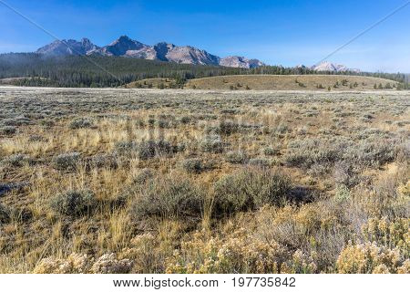 A variety of grassy flora grow in a grassland sitting before the Sawtooth Mountains.