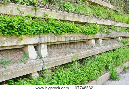 Gray concrete retaining wall planted with green plants.